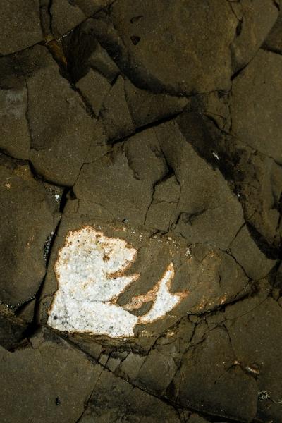 Incrustation dans la roche