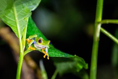 04 - Costa Rica