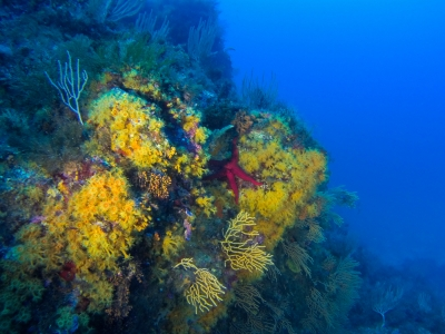 Plongée Lavandou